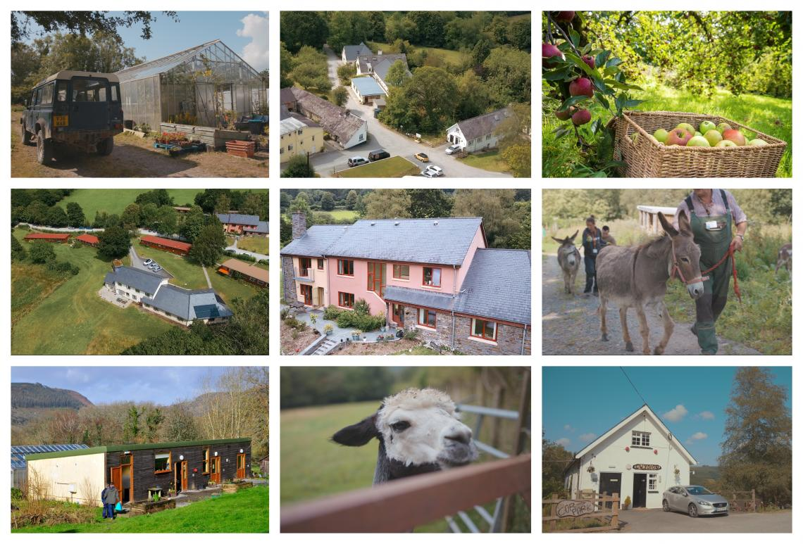 A collage of photos of the community including animals and buildings.